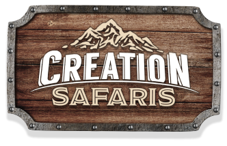 Creation Safaris